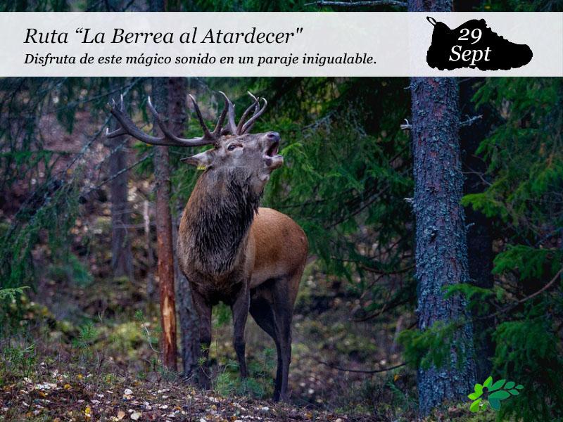 La Berrea al Atardecer | 29 de septiembre