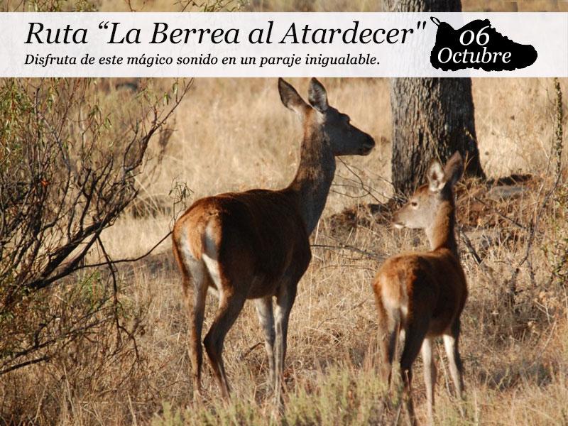 La Berrea al Atardecer | 06 de octubre