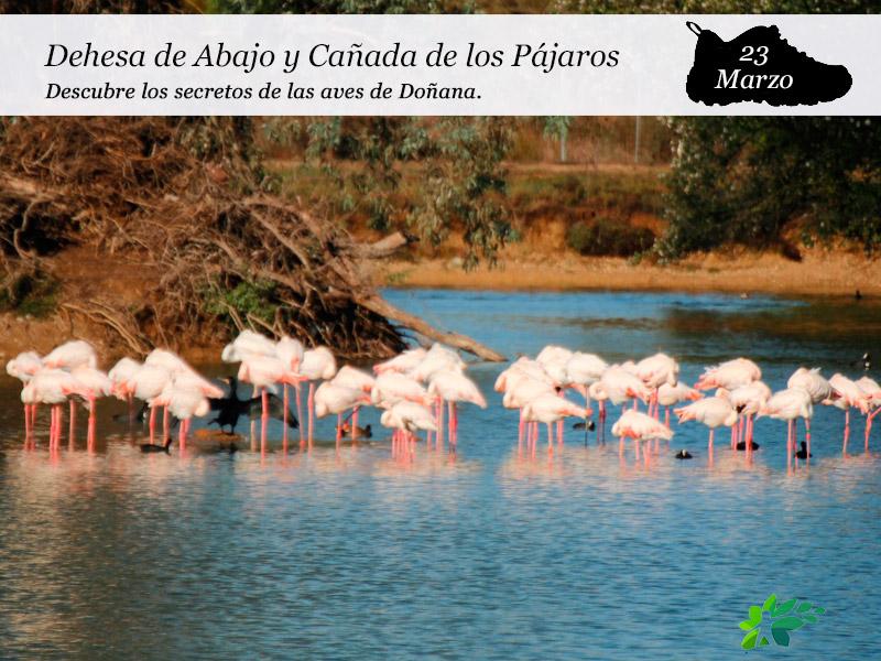 Dehesa de Abajo y la Cañada de los Pájaros | 23 de Marzo