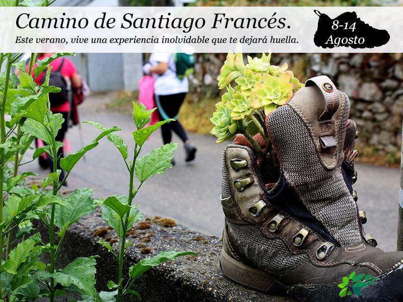 Camino de Santiago Francés| del 8 al 14 de Agosto