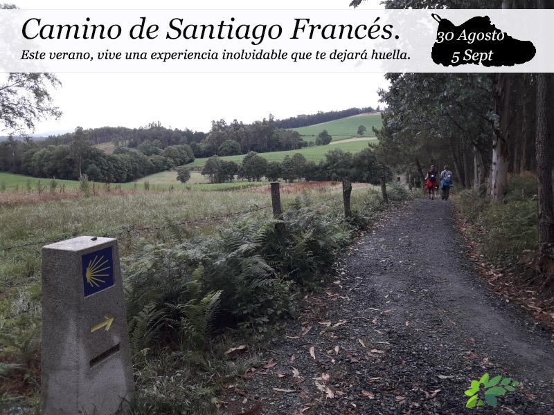 Camino de Santiago Francés| del 30 de agosto al 5 de septiembre